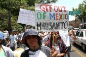 1369510114-activists-protest-against-monsanto-in-morelia-mexico_2086342