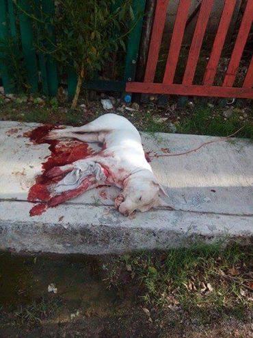 perro asesinado5